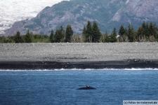 Seward Landschaft und Buckelwal