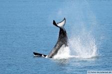 Orca-Seward-10