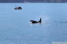 Orca-Seward-12