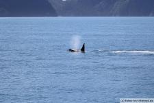 Orca-Seward-13