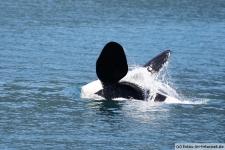 Orca-Seward-2