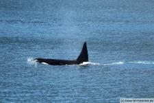 Orca-Seward-5