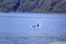Orca-Seward-6