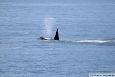 Orca-Seward-7