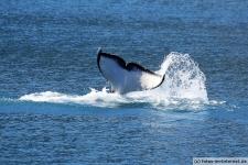 Orca Flosse