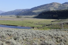 Lamar Valley im Yellowstone NP