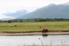 Alaska, Hallo Bay