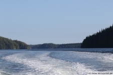 Tofino-Bear-Watching-Tour-5