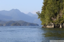 Tofino-Bear-Watching-Tour-6