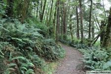 Tofino-Combers-Beach-Trail-1