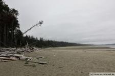 Tofino-Combers-Beach-Trail-3