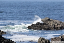 Ulcluelet-Wild-Pacific-Trail-3