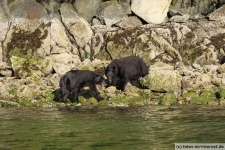 Tofino-Bear-Watching-Tour-12