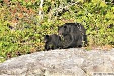 Tofino-Bear-Watching-Tour-2