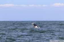 Vancouver-Island-Whale-Wachting-ecoventures-11