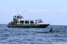 Vancouver-Island-Whale-Wachting-ecoventures-17