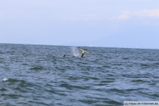 Vancouver-Island-Whale-Wachting-ecoventures-19