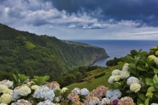 Azoren Landschaft mit Hortensien