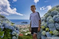Hortensien auf den Azoren