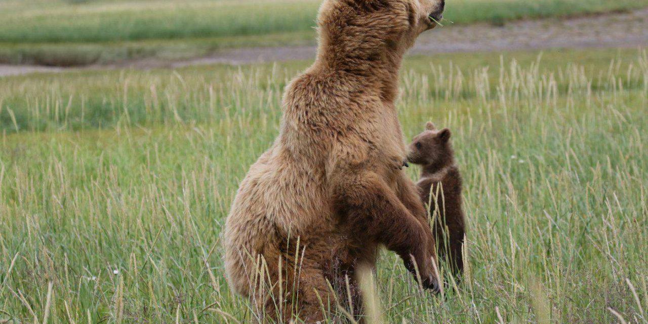 Alaska Reisebericht Teil 2