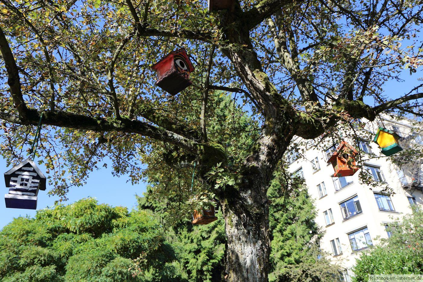 Vancouver: Baum mit Vogelhäuschen