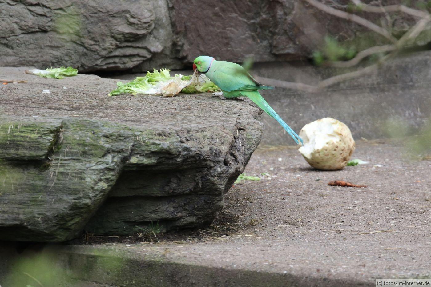 Kölner Zoo - Papagei im Bärengehege