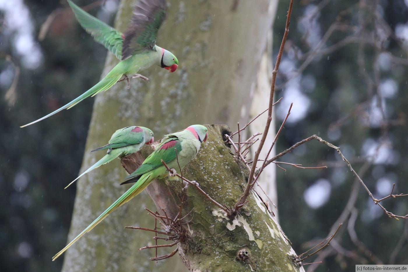 Kölner Zoo - Papageien