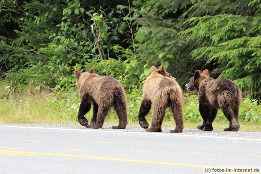 Bild von Braunbären