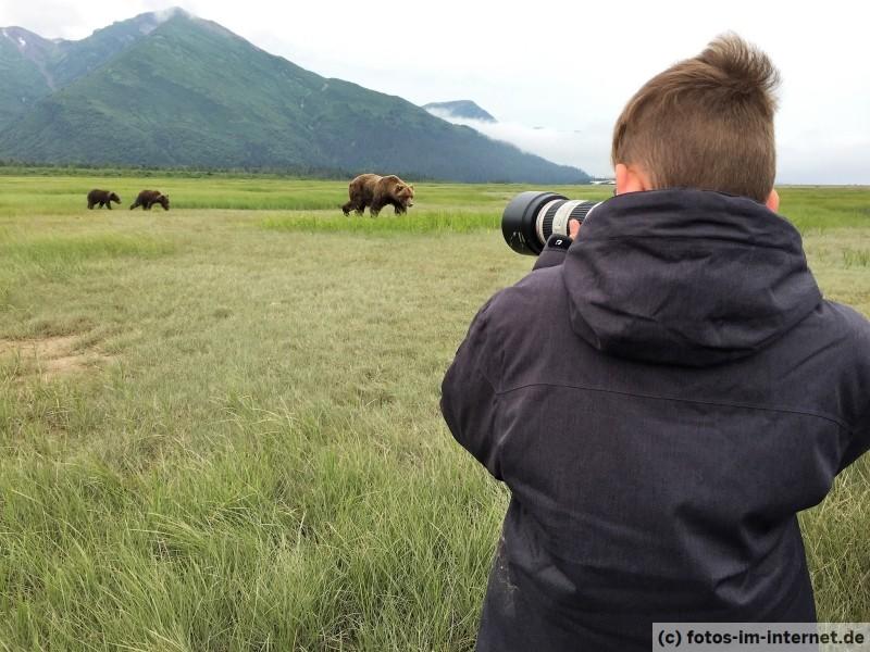 Tim beobachtet eine Braunbären Mutter mit zwei Jungtieren.
