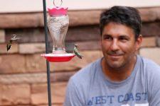 Kolibri Bild