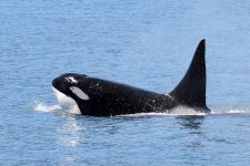 Whale Watching und Wildlife Tour in Seward, Alaska