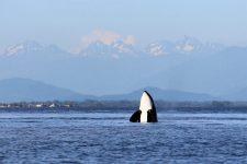 Vancouver Island Reisebericht 2018