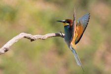 Vogel Fotografie - Fliegende Vögel fotografieren