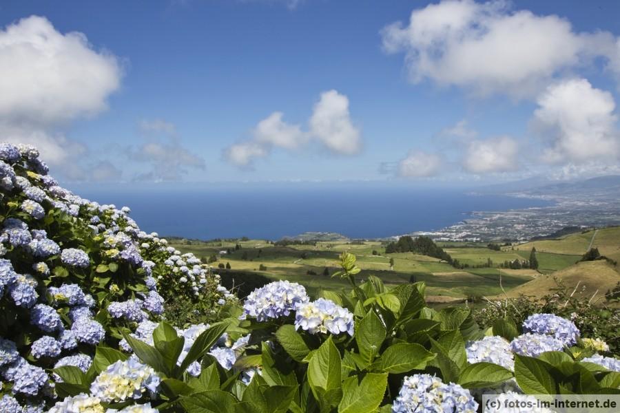 Azoren Reisebericht - Hortensien