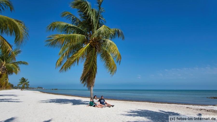 Key West Strand Palme