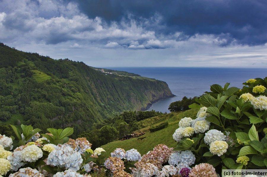 Azoren Reisebericht - Hortensien bei Nordeste