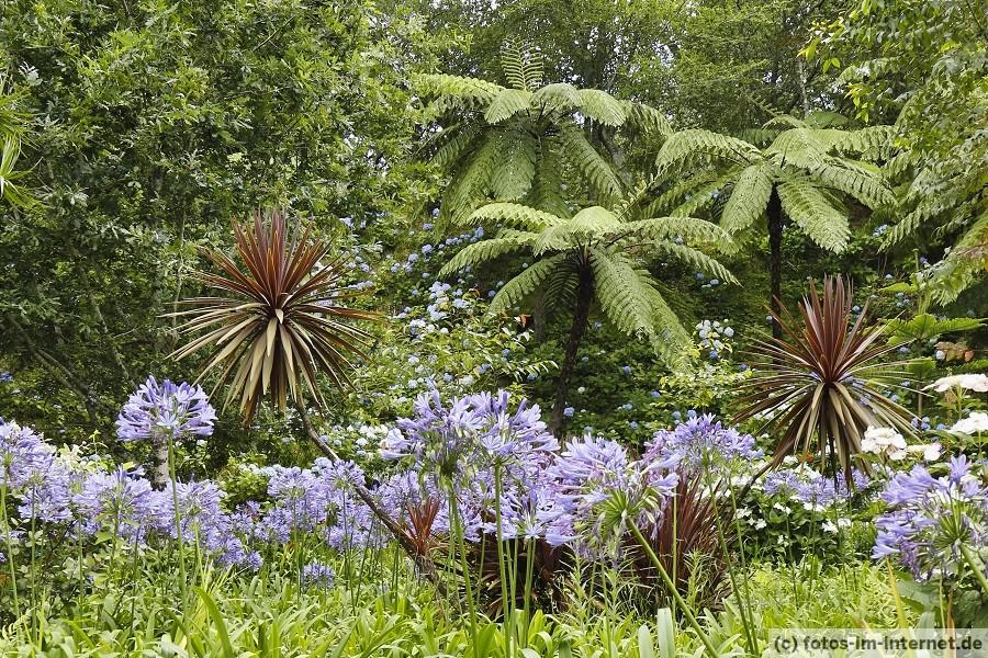 Vegetation auf den Azoren