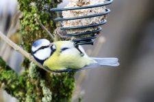 Vögel - Bildergalerie