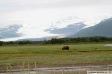 Braunbär Alaska, Hallo Bay