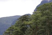 Baum voller Weißkopfseeadler