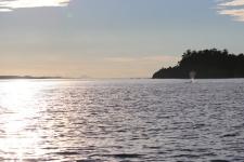 Vancouver Island, Orca