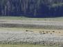 2018 Yellowstone Nationalpark